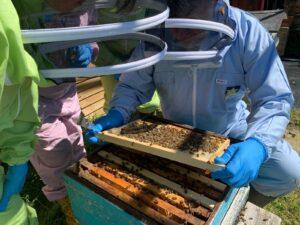 honey making courses